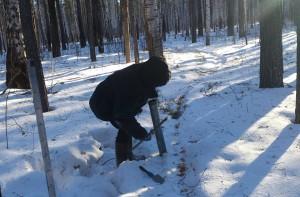 4 снегосъемка на лесном маршруте в Таборах 105