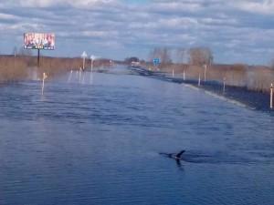 2016-04-15 затоплена дорога Тура-Ирбит. фото Замошского